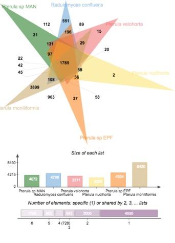 Pterulaceae_genomics
